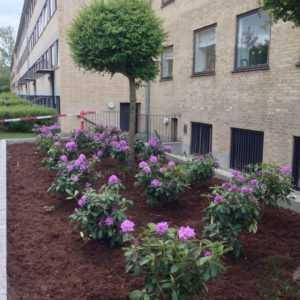 Professionel plantning af træer og buske - Det' Havemanden