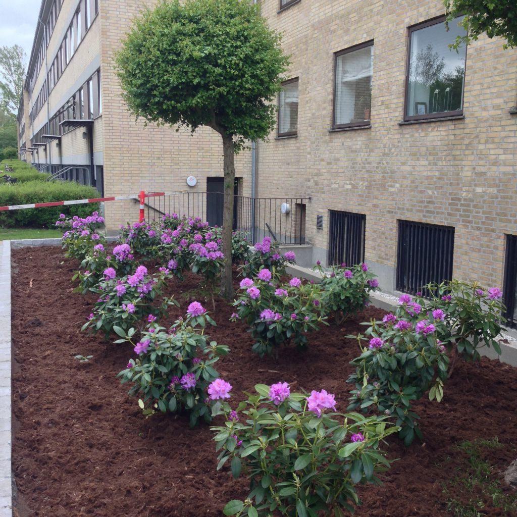 Plantning af træer og buske til lave priser - Professionel og hurtig service